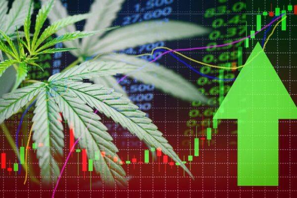 Instagram Marketing Basics For Cannabis Entrepreneurs